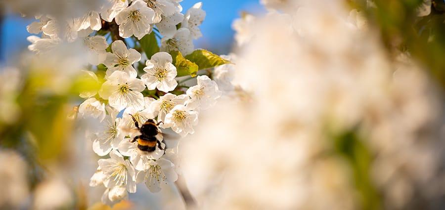 Nachhaltigkeit-Frühlingsmomente