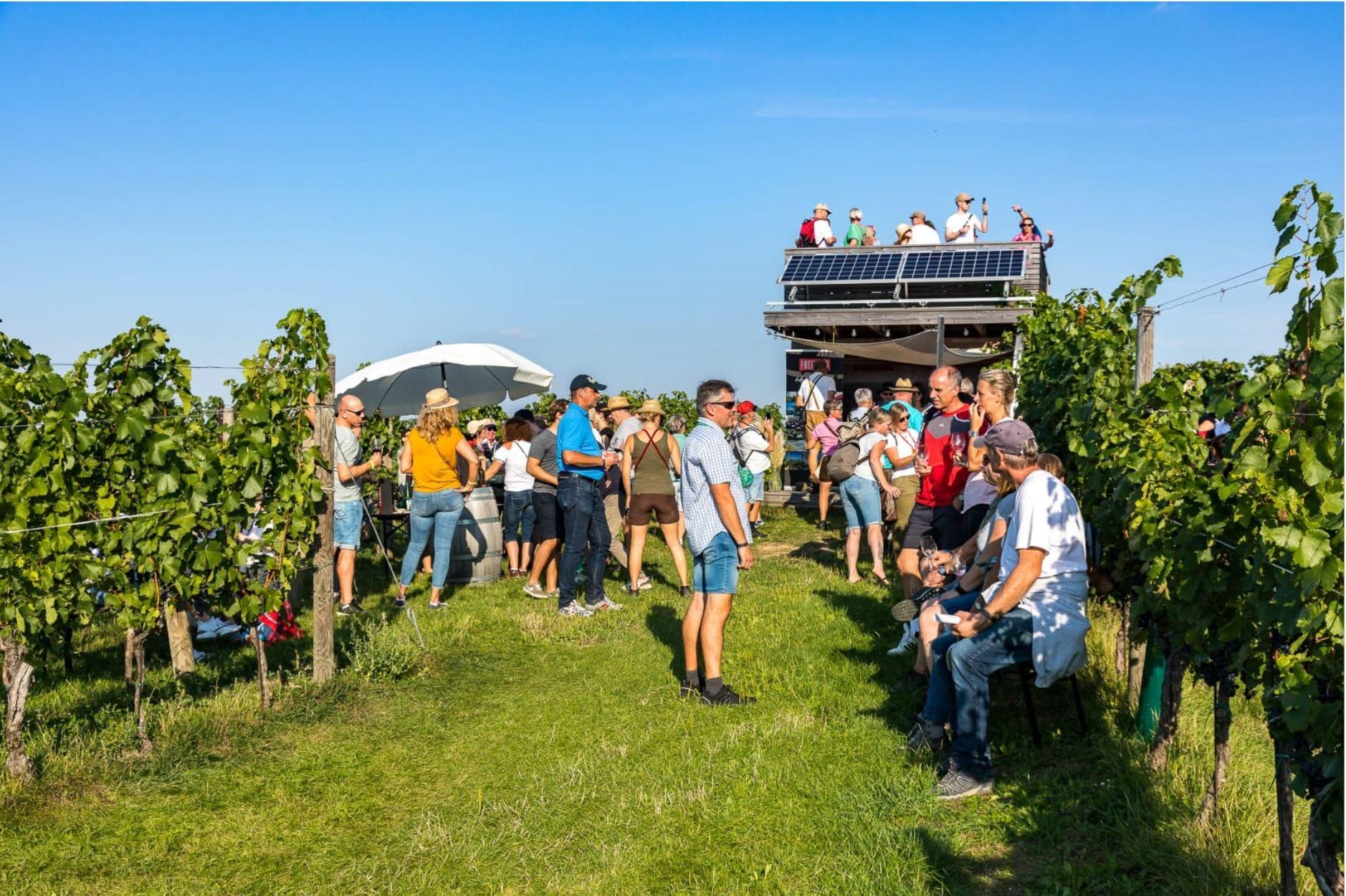 Weingartenwanderung 2020 - Weingut Silvia Heinrich - Goldberg - Burgenland