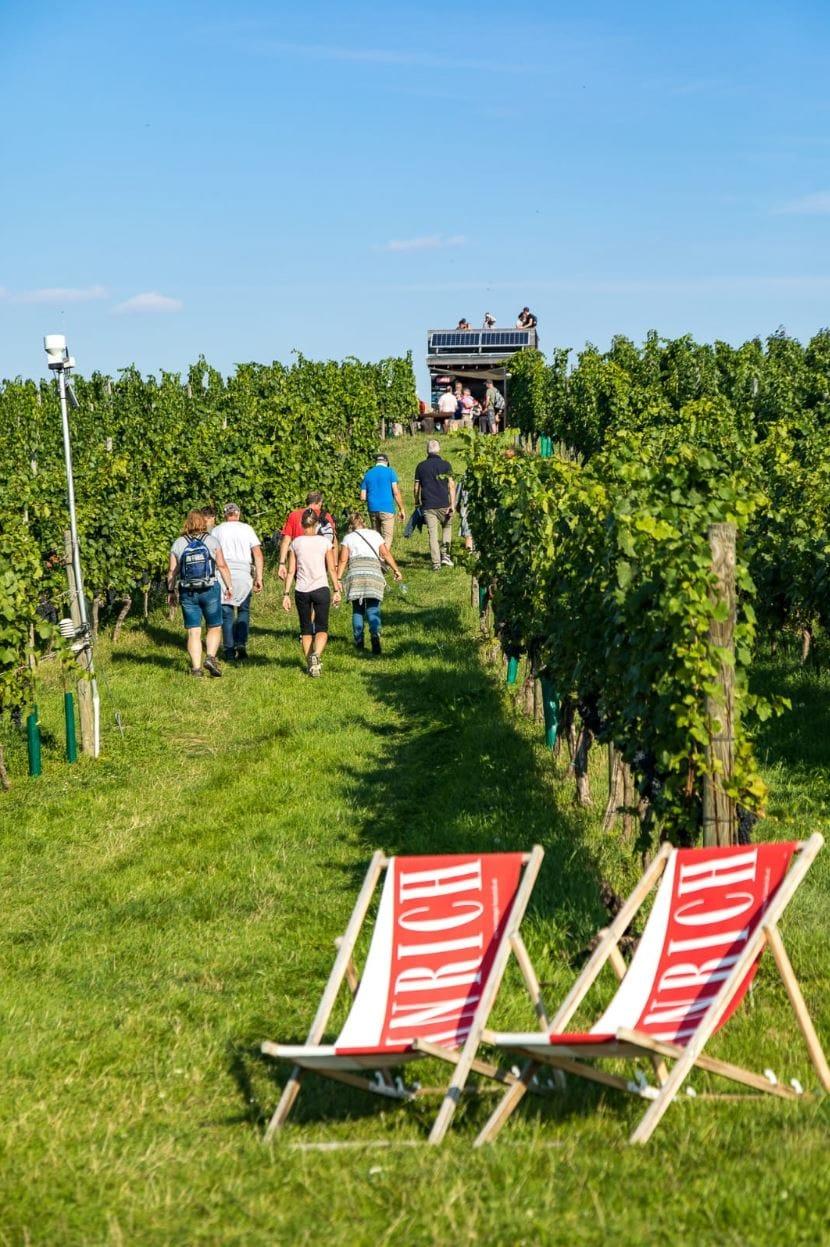 Weingartenwanderung 2020 - Weingut Silvia Heinrich - Villa Goldberg